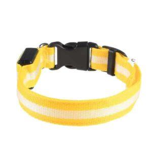 Leuchtendes Hundehalsband